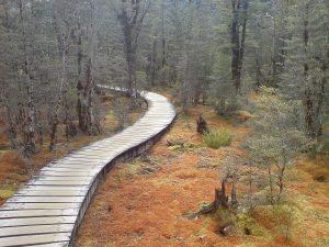 picture of boardwalk